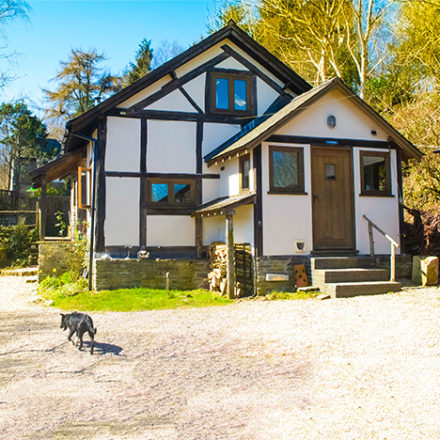 welsh holiday cottages, cottage in the woods wales, dog friendly cottages mid wales