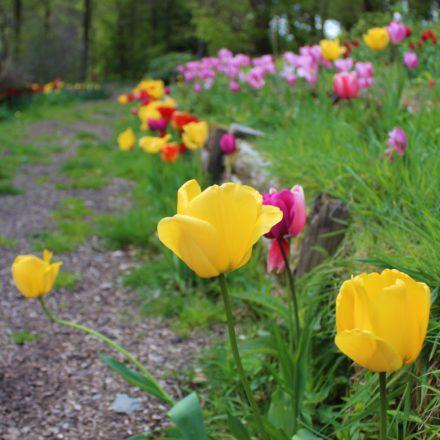 flowers, glamping holidays, weekend getaways uk