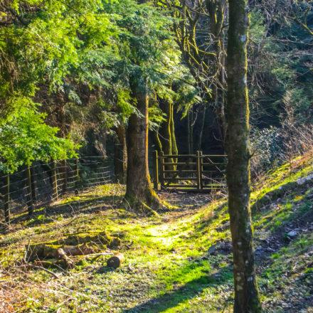 woodland holidays wales, group weekend breaks, retreat holiday
