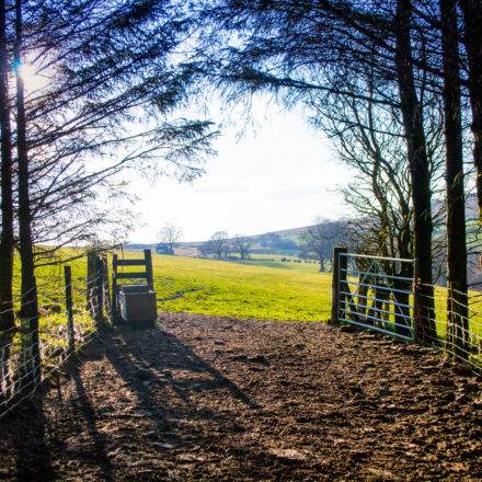 woodland holidays wales, technology free holiday, yoga retreat venues