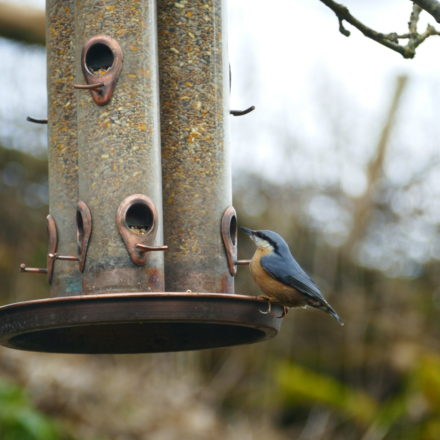 retreat centres for hire, bird feed, venue hire wales