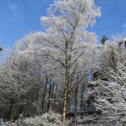 holidays in wales, retreat holidays, woodland holidays wales