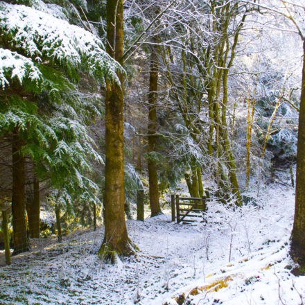 woodland holidays wales, woodland holidays, large family holidays